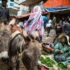 woman in green dressed sitting beside green vegetable and two gray donkey's